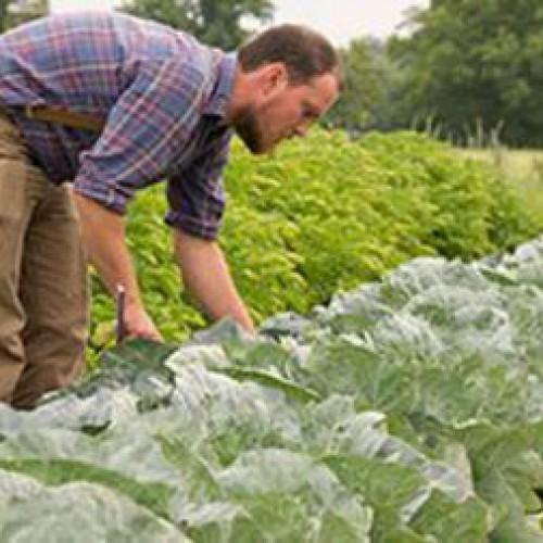 Ξεπέρασαν τις 11.500 οι αιτήσεις στο πρόγραμμα των Νέων Αγροτών