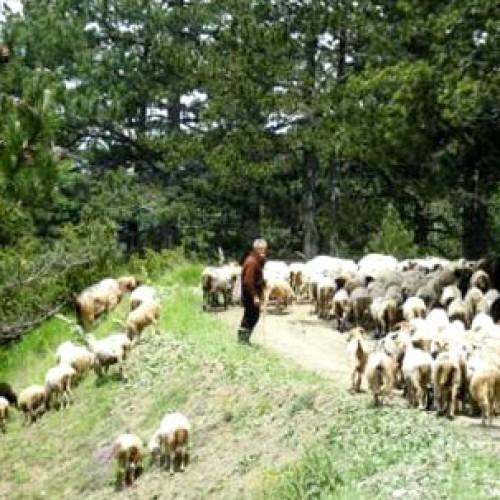 Πράσινο φως για μόνιμες κτηνοτροφικές εγκαταστάσεις σε δασικές εκτάσεις