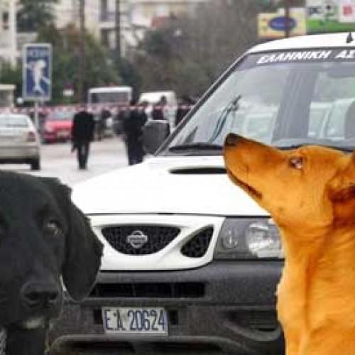 Μετά την απελευθέρωση σκύλων και γαιδάρων, άντε και στα δικά μας…