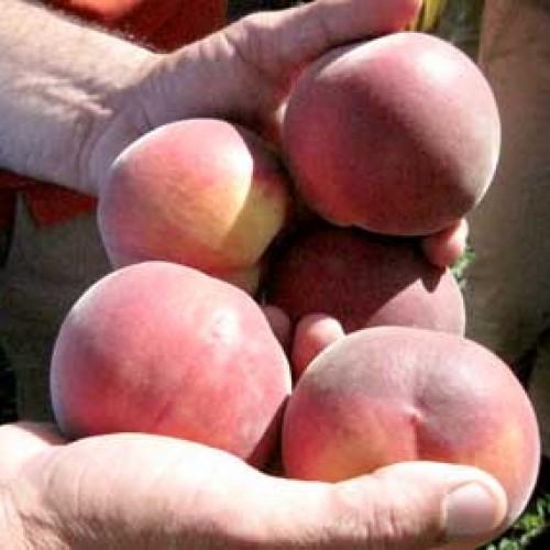 Μέτρα για τα ροδάκινα ζητά η copa - cogeca από την Κομισιόν