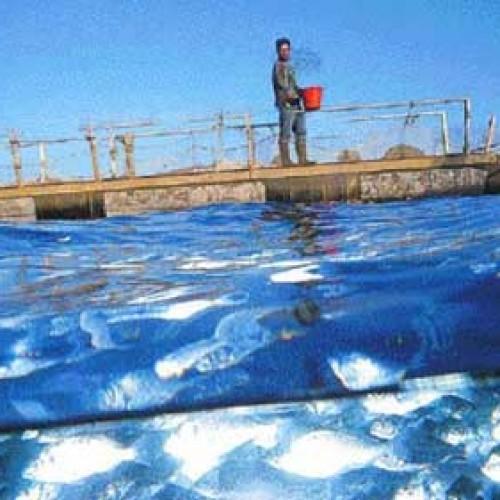 Δημοσιεύτηκαν τα ΦΕΚ για την ενίσχυση των Υδατοκαλλιεργειών