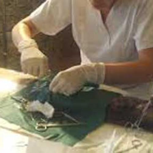 Ολοκληρώθηκε το πρόγραμμα στείρωσης και εμβολιασμού αδέσποτων ζώων