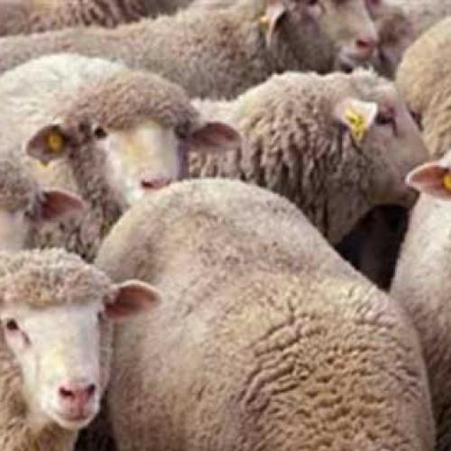 """Μπατσαρά: """"Να δοθούν αποζημιώσεις στους κτηνοτρόφους για τον καταρροϊκό πυρετό"""""""