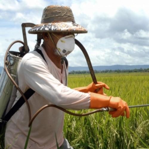 H χρήση φυτοπροστατευτικών προϊόντων και την επίδραση τους στις μέλισσες