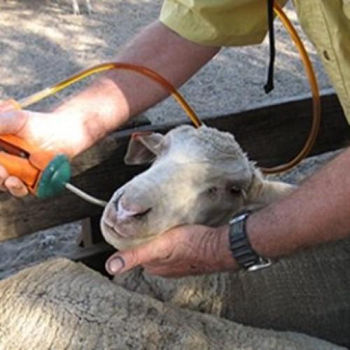 Αναζήτηση των Εγκεκριμένων Κτηνιάτρων Εκτροφής της Π.Ε. Ημαθίας