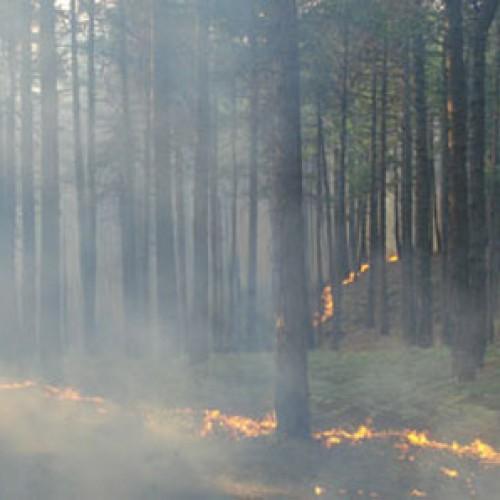Οδηγίες προστασίας για την αντιμετώπιση κινδύνων από δασικές πυρκαγιές και καύσωνα