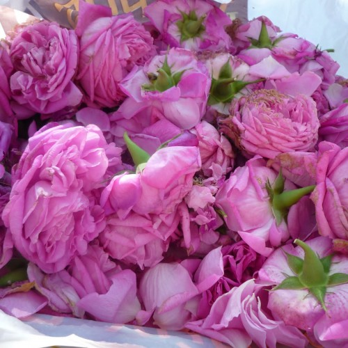 Τριαντάφυλλο γλυκό Ικαρίας