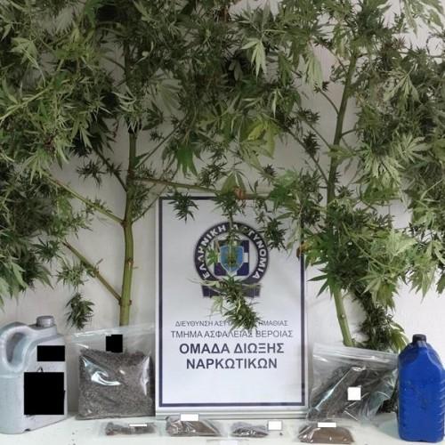 Συνελήφθησαν 2 αδέρφια στην Ημαθία για κατοχή και καλλιέργεια κάνναβης