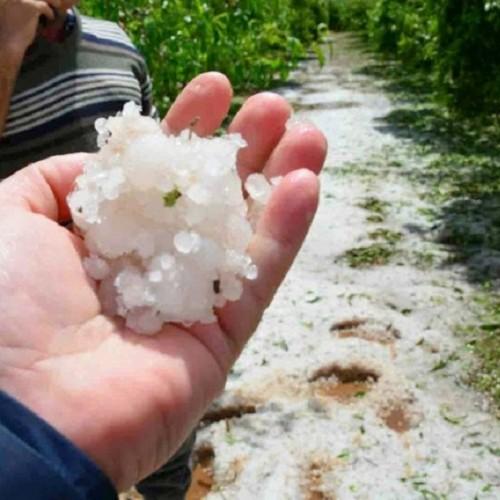 Ερώτηση για τις καταστροφικές ζημιές από χαλαζοπτώσεις σε χωριά της Ημαθίας, κατέθεσαν    βουλευτές του ΚΚΕ