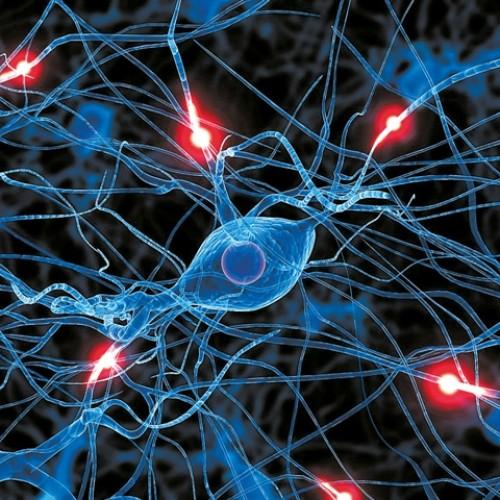 Εκατοντάδες μεταλλάξεις σε κάθε νευρώνα του εγκεφάλου συσσωρεύονται με την πάροδο των χρόνων