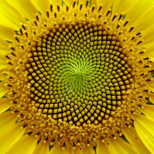 Η συμμετρία στη φύση και ο ρόλος της στη φυσική - Από τον Πυθαγόρα μέχρι το σωματίδιο του Θεού