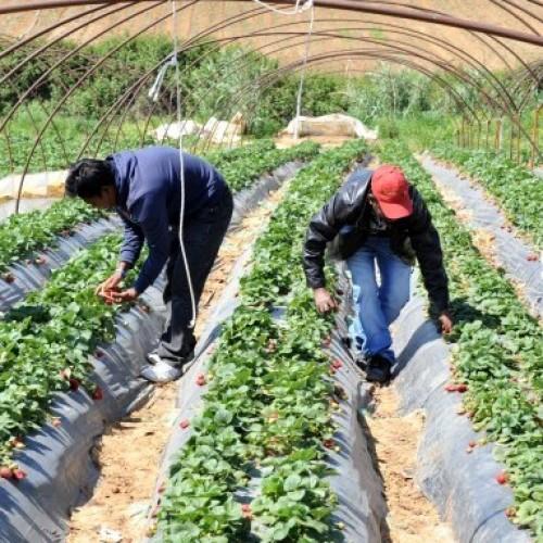 Αλλοδαποί εργάτες γης