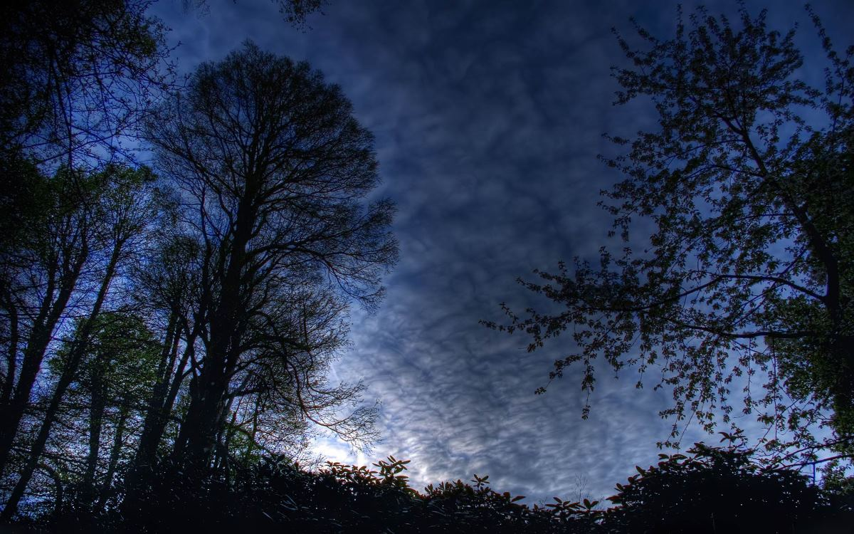 forest-night-sky-background-photos-new-best-hd-wallpaper-of-night-time