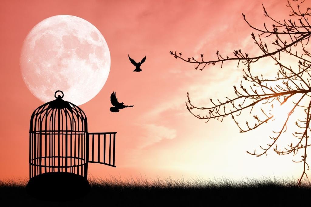 α19 pink-bird-cage