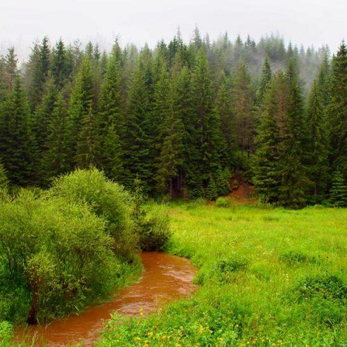 """""""Ο πολυνόμος, τα δάση και τα μοναστήρια"""" γράφει ο Πυθαγόρας Ιερόπουλος"""