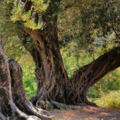 """""""Νέοι στον Άδη"""": ο Βαγγέλης Χρόνης και η διαχρονία της ποίησης. Γράφει ο Σίμος Ανδρονίδης"""