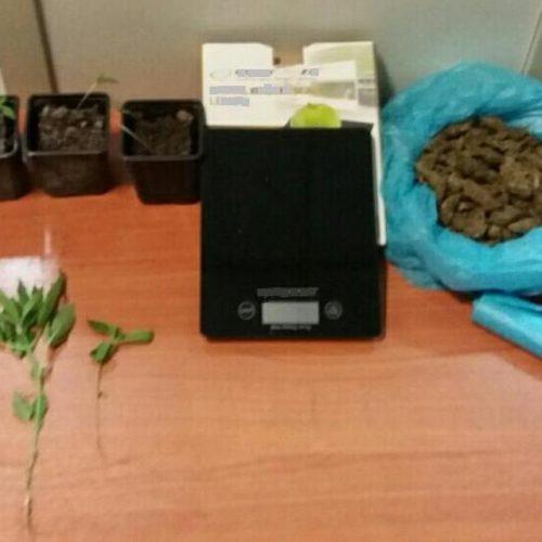 Συνελήφθη   για καλλιέργεια κάνναβης