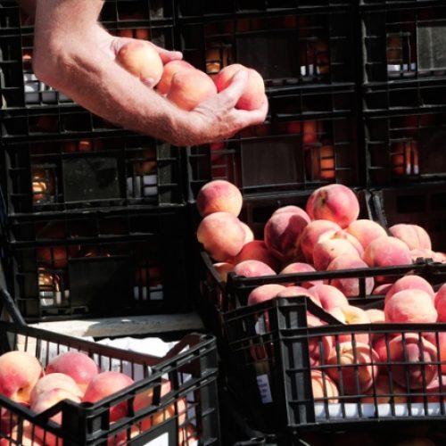 """""""Έκτακτα μέτρα στήριξης των παραγωγών λόγω του εμπάργκο"""" γράφει ο Γιώργος Ουρσουζίδης"""