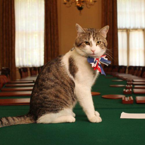"""""""Γάτος παρά τω... πρωθυπουργώ"""" γράφει η  Τασούλα Επτακοίλη"""