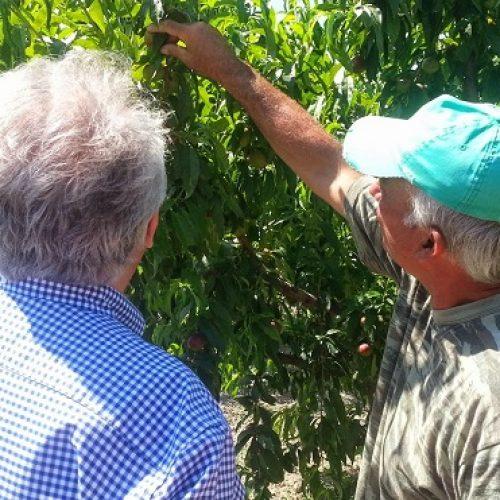 ΠΑΣΟΚ – ΔΗΜΑΡ:   Η κυβέρνηση υποβαθμίζει τον ΕΛΓΑ και ταλαιπωρεί τους αγρότες