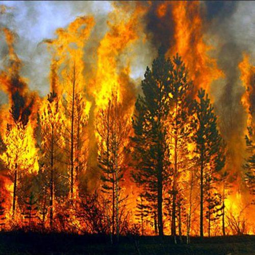 Ενημέρωση για  κίνδυνο δασικής πυρκαγιάς στην περιοχή Βέροιας για τη Δευτέρα 18 Ιουλίου
