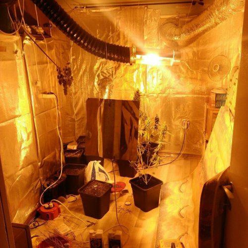 Εντοπίστηκε εγκατάσταση υδροπονικής καλλιέργειας κάνναβης μέσα σε σπίτι