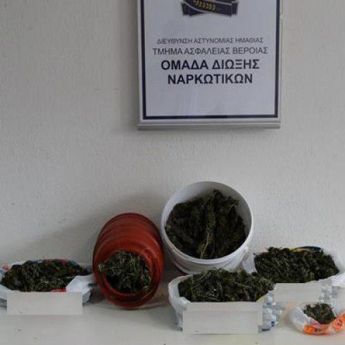 Συνελήφθη 35χρονος στην Ημαθία για κατοχή και διακίνηση κάνναβης