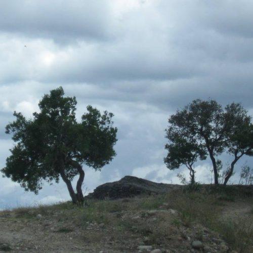"""Πάνος Κυπαρίσσης """"Δέντρο της τύχης"""""""