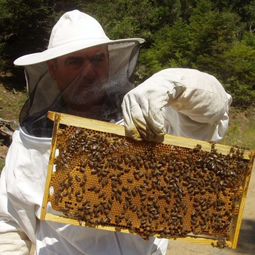 Καταγραφή κυψελών διαχείμανσης για ένταξη στη δράση ενίσχυσης της νομαδικής μελισσοκομία στην Π.Ε Ημαθίας