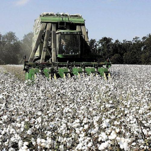 3ο δελτίο γεωργικών προειδοποιήσεων ολοκληρωμένης φυτοπροστασίας στην βαμβακοκαλλιέργεια της Π.Ε Ημαθίας