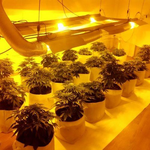 Εντοπίστηκε εγκατάσταση υδροπονικής καλλιέργειας κάνναβης σε διαμέρισμα