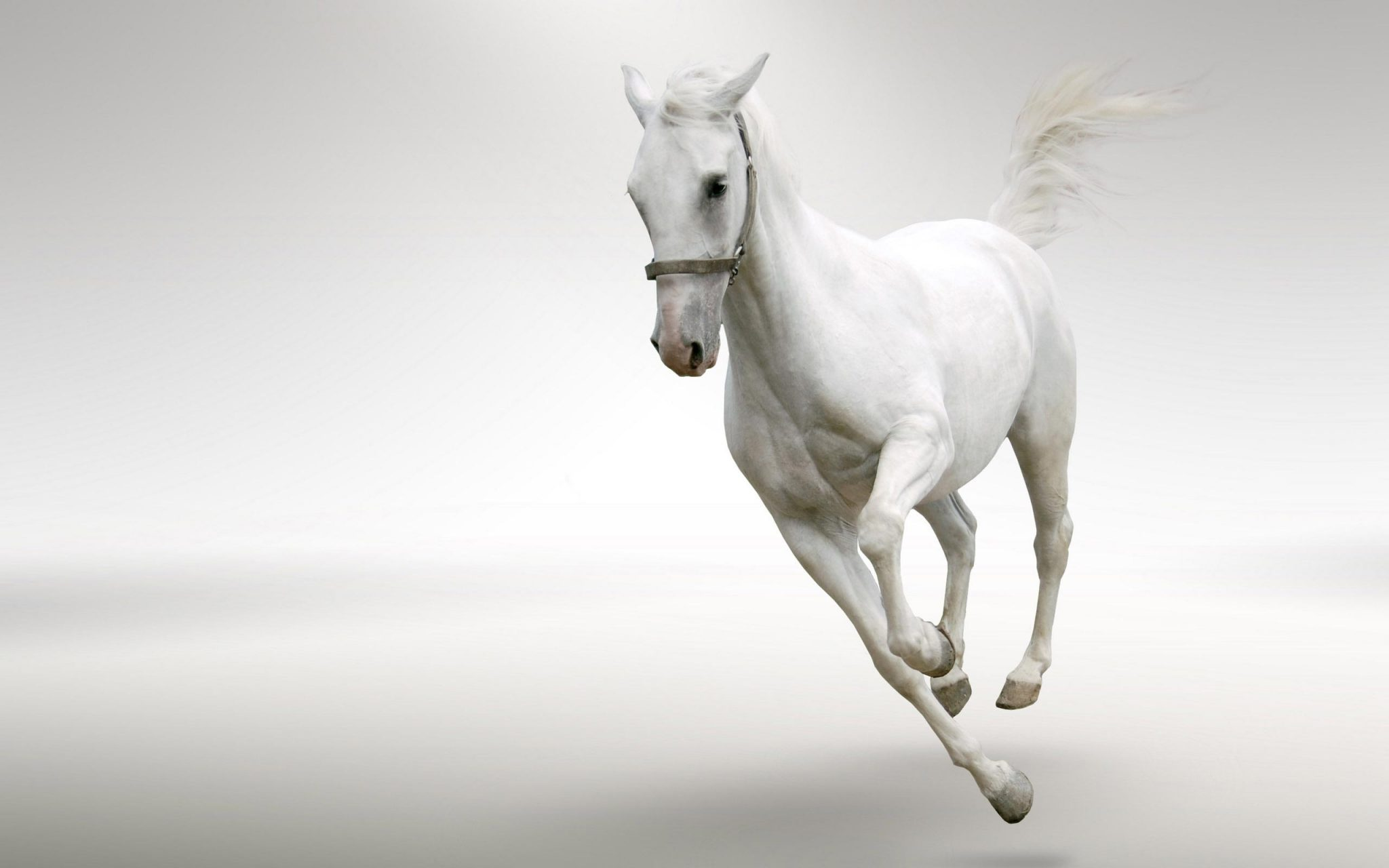 white-horses-running-wallpaper-2