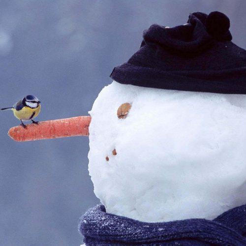 ΕΜΥ: Χιονοπτώσεις και  πτώση της θερμοκρασίας
