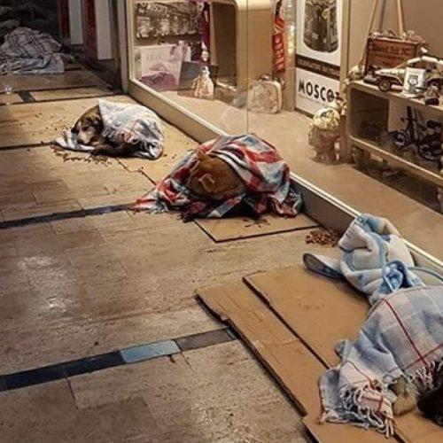 Ζέσταναν τα αδέσποτα στην Κωνσταντινούπολη με τον χιονιά