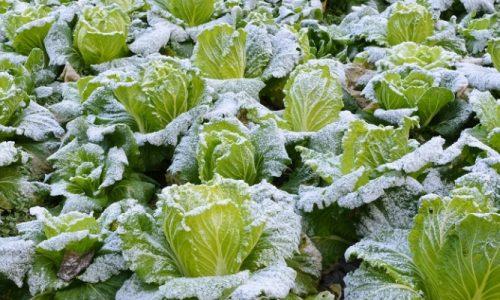 Αναγγελία Ζημιάς από παγετό στο Δήμο Βέροιας
