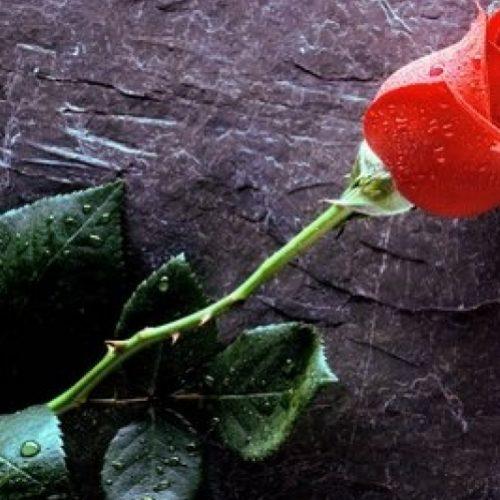 Συλλυπητήριο Μήνυμα Δημάρχου και του Δημοτικού  Συμβουλίου Βέροιας για το θάνατο του Στάθη Παναγιωτίδη