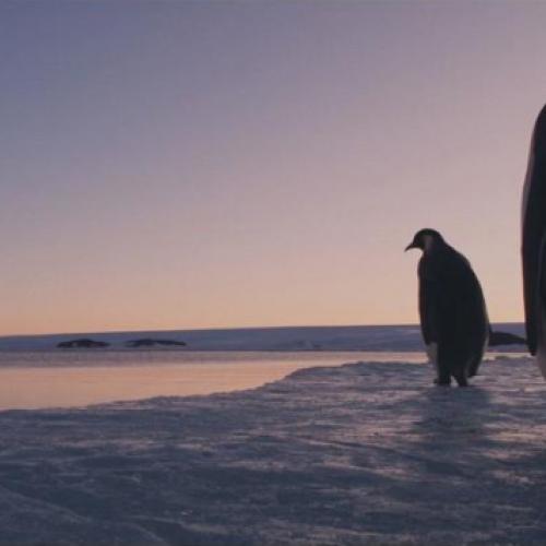 """""""Η προσωπική διαφορά του Πιγκουίνου"""" γράφει η Λιάνα ΚΑΝΕΛΛΗ"""
