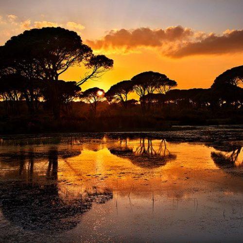 Η πιο εξωτική γωνιά της Ελλάδας!  Το παραθαλάσσιο δάσος της  Στροφυλιάς