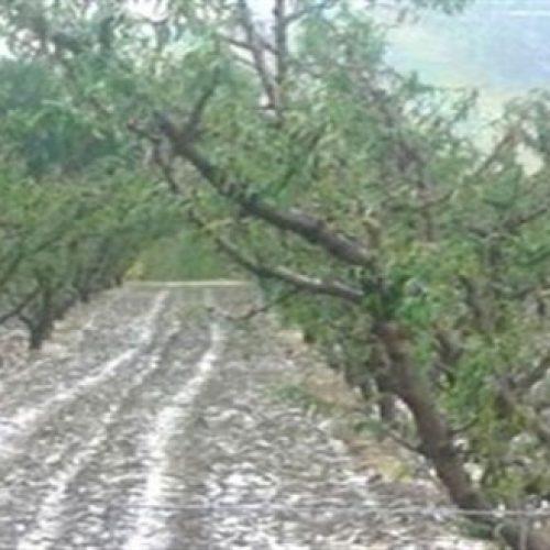 Αναγγελίες Ζημιάς από χαλαζόπτωση και  βροχόπτωση