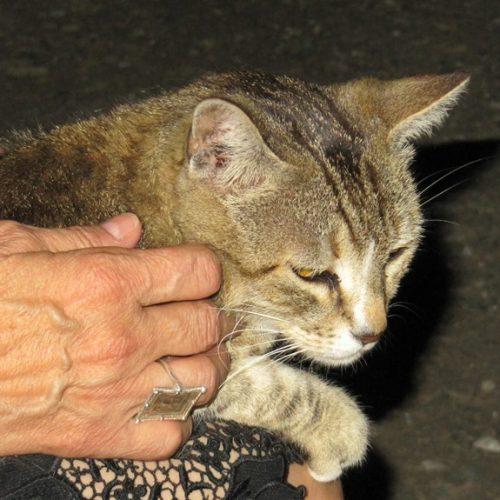 Θύμιος, ο μουσικόφιλος γάτος των Αιγών