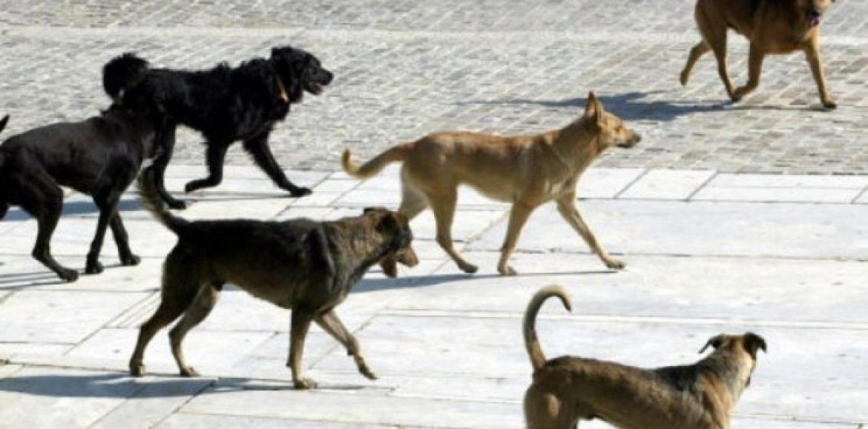 """Φιλοζωικός Όμιλος Ημαθίας: """"Όσο ο Νόμος δεν τηρείται τα αδέσποτα σκυλιά διαρκώς θα πληθαίνουν"""""""