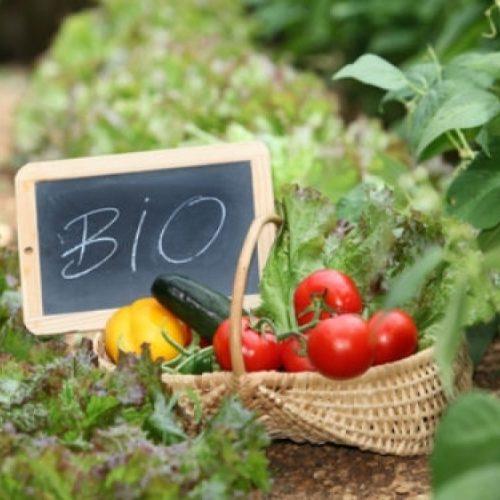 Ανάρτηση καταστάσεων πληρωμής στο πλαίσιο του Μέτρου Μ11 Βιολογικές καλλιέργειες