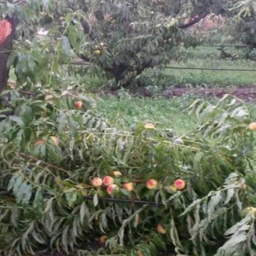 Δηλώσεις για τις ζημιές στις καλλιέργειες στο Δήμο Βέροιας