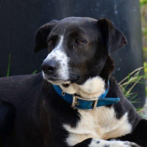 Αναζητούνται ιδιοκτήτες σκύλου