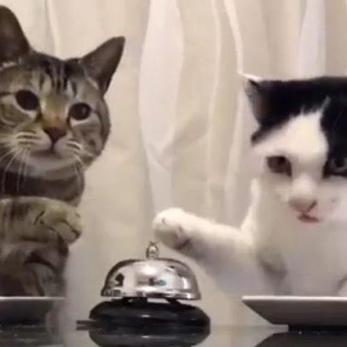 Ψιτ, γκαρσόν! - Video
