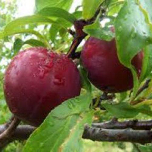 Δηλώσεις για Ζημιά από βροχόπτωση στο Δήμο Βέροιας