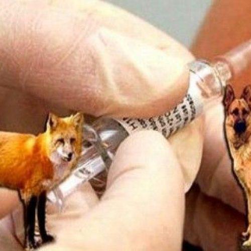 Μέτρα διαχείρισης των εμβολιακών δολωμάτων για την λύσσα στην Π.Ε Ημαθίας