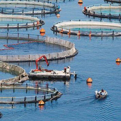 Επενδυτικά σχέδια υδατοκαλλιεργειών και μεταποίησης αλιευτικών προϊόντων και αλιείας