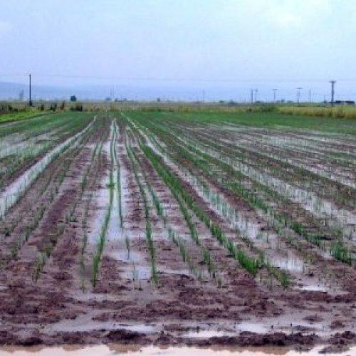 Από τον ΕΛΓΑ στο Δήμο Βέροιας οι πίνακες επανεκτιμήσεων για ζημίες φυτικής παραγωγής
