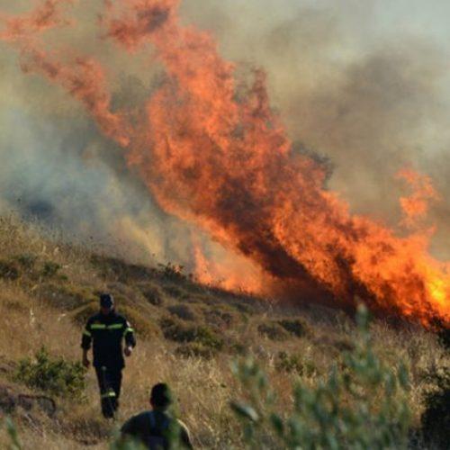 Πυρκαγιά σε δασική έκταση στα Ριζώματα και σε εγκαταλελειμμένο εργοστάσιο